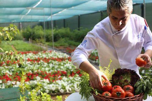 UAEの高級ホテルに自社農園を整備「健康・環境」への意識の高い観光客をターゲットに
