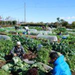 生協による都市農業の参入。あきる野に直営農場と直売所を併設