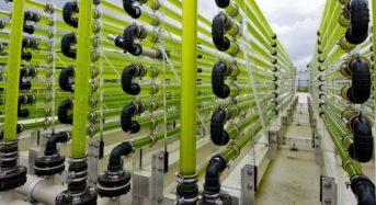 米国による新たな法制度、微細藻類がハイテク農業のカテゴリーに分類へ