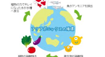 """アクアポニックスの詳しい仕組み。魚、微生物、植物の助け合い""""生態系における相互共生"""""""