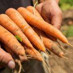 ドイツBASF、野菜種子事業の買収についてバイエルと最終合意に向け独占協議