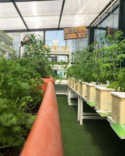 UAEドバイのレストラン、水耕栽培による畑から食卓までFarm to Tableに挑戦