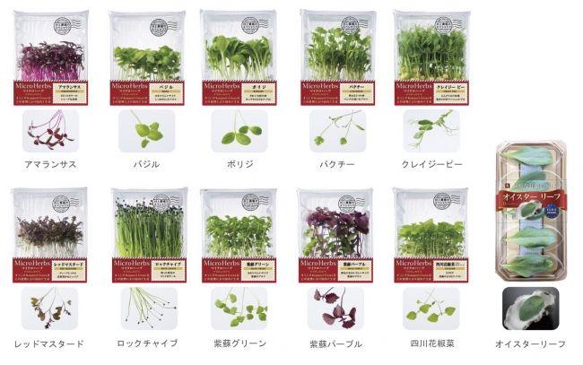村上農園、植物工場による新商品「マイクロハーブ・オイスターリーフ」の販売開始