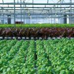 イスラエルTAP社、自分で組立て可能な「商業生産用の水耕ハウス」キットを開発