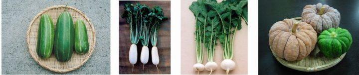 京セラ・グループ「なにわの伝統野菜」の栽培を通して生物多様性保全活動を推進