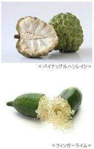 ケイ・オプティコム、日本で栽培が適さないパイナップルの育成検証。農業IoTや植物工場による苗生産も