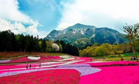 J&J事業創造、埼玉県と連携して観光農園・フルーツ狩りで訪日外国人を誘致
