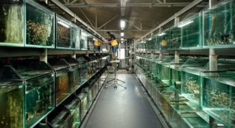 シンガポール、植物工場のような多段式・ハイテク水産養殖施設が新たにオープン予定