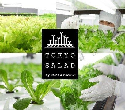 東京メトロ、植物工場「とうきょうサラダ」を使ったオリジナルメニューを松屋浅草で期間限定販売