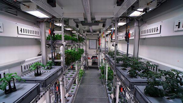 ドイツ南極基地、植物工場による野菜の初収穫。5月までに生産量拡大へ