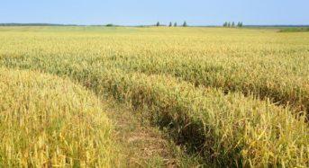 日立ソリューションズ、衛星画像解析を活用した農業の収量予測システムなどをインド市場で落札