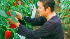 宮崎県新富町・こゆ財団がIoT推進コンソに加盟。アグテックによる国産ライチの生産も