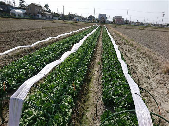 NEXCO中日本、農地所有適格法人を設立。農業により高速道路沿線地域を活性化