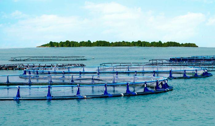 藻類やエビ養殖など、一次産業のハイテク化を目指す東南アジア最大の資源国「ブルネイ」