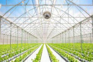 ベトナム・ホーチミン市、植物工場・ハイテク農場向けの特別融資ローンを検討