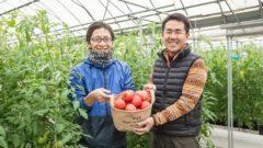 テラスマイル、養液栽培の生産・販売企業と連携。データ農業経営支援のサービス開発へ