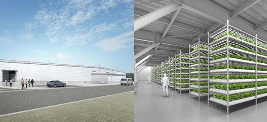 三菱ガス化学、1日3.2万株の国内最大級の植物工場が竣工