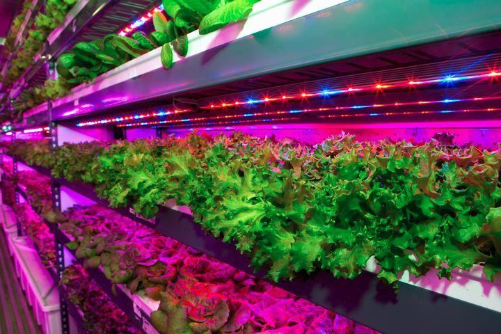 エミレーツ・グループ、世界最大級の植物工場を中東ドバイにて稼働。来年末には航空機内食にも提供?!