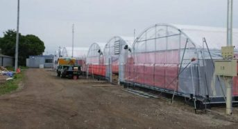 グリーンリバーHD、水耕による縦型・植物工場システムに関する特許5件を取得。全国展開へ