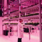 ディズニーに隣接するフロリダ「マリオット・ホテル」内に植物工場がオープン