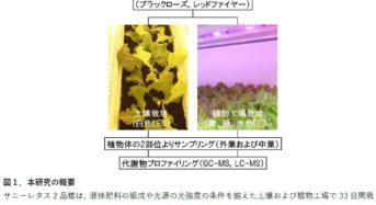 キーストーンテクノロジー、筑波大学など「植物工場サニーレタス」の味覚・機能性成分の組成を解明