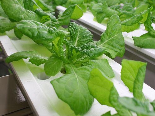 植物工場「エコデシックで美味しい野菜ファンド」の出資者が100人超え・70%以上を達成