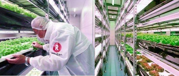 楽天ソシオビジネス、農福連携・人工光型植物工場を静岡県磐田市に建設