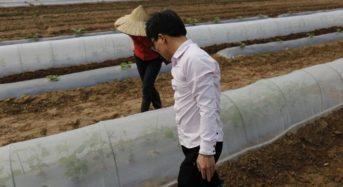 アグリメディア、電子機器製造のメイコーとベトナムにて有機栽培・農業参入へ
