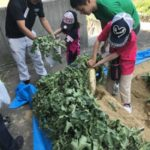 YACYBER、セレッソ大阪ファン感謝デーにて子供向け野菜収穫体験を実施