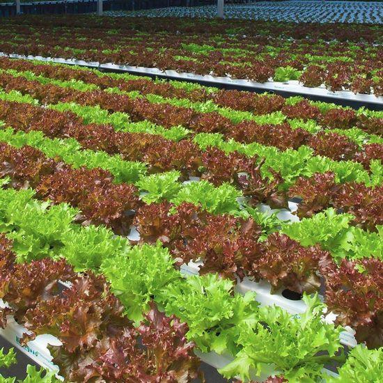 ブラジルでもハイテクな都市型ファームが稼働。アクアポニクスによる環境配慮型農業へ