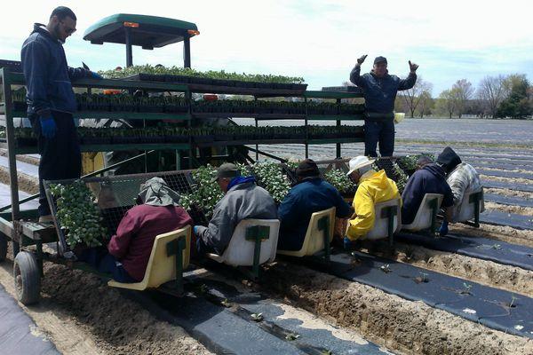 巨大農家グロートピア、農業用ドローンを自社開発。1,500万円の経費削減へ