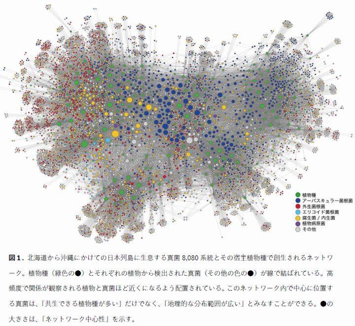 京大、日本列島の多様な菌から農業利用可能なものを選別。植物150種と真菌8,080系統をデータ化