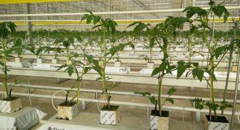 潜在的な可能性ではオランダを超えるチュニジア。地中熱を利用した植物工場が普及