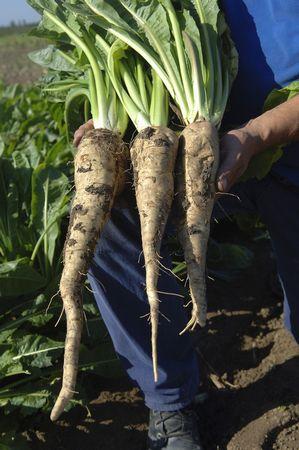 帝人、スーパー大麦に続く機能性食品素材としてオランダ企業とイヌリンの独占販売契約へ