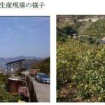 エネコム、広島県「傾斜地レモン栽培」×「IoT」連携による実証実験を開始