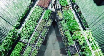 米国ボストン、若手による植物工場ベンチャー設立。施設稼働まで全てネットで完結