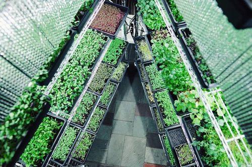 米国ボストン、若手企業が植物工場ベンチャー設立。施設稼働は全てネット上で完結