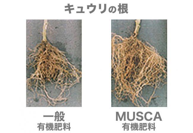 昆虫ベンチャーのムスカ、畜産糞尿を有機肥料や飼料に100%リサイクルへ