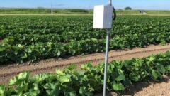 西松建設、LPWAとIoT技術を活用し農業分野で計測監視システムの実証実験を開始