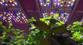 NASAの植物工場、オスラム社のスマート光源システム「Phytofy」を採用