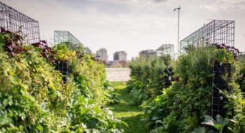 ベルギーの都市型農業ベンチャー、約1.5億円をかけて屋上ファームを整備。5年後に150カ所の農場を計画