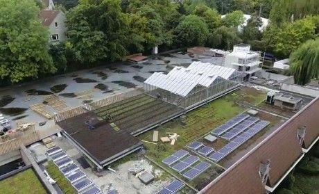 ブリュッセル、欧州初の小売スーパー内にある屋上ファームが収穫ピークへ