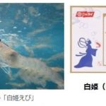 日本水産、国産陸上養殖バナメイエビ「白姫えび」を販売開始