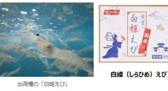 日本水産、環境保全・低コスト設備による国産陸上養殖バナメイエビ「白姫えび」を販売開始