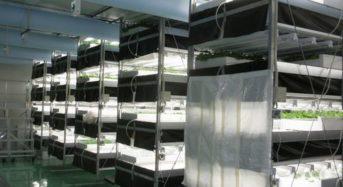 野菜工房、ファンドからの増資を受け、日産4,000株の第3植物工場を建設