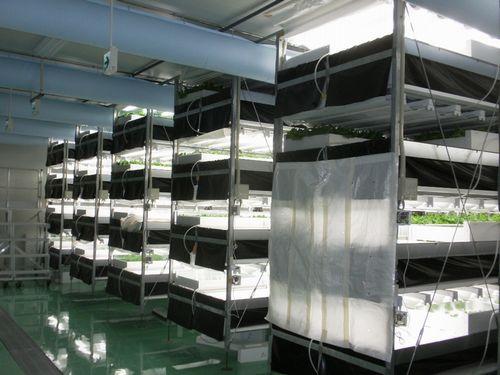 野菜工房、めぶき地域創生ファンドから1億2,000万円を調達。自社施設では最大規模の植物工場を建設