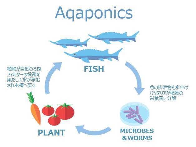 アクアポニックスを活用した植物工場事業を展開するプラントフォーム、総額2000万円の第三者割当増資