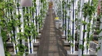 縦型水耕・植物工場システムのグリーンリバーHD、総額1億円強の資金調達を実施