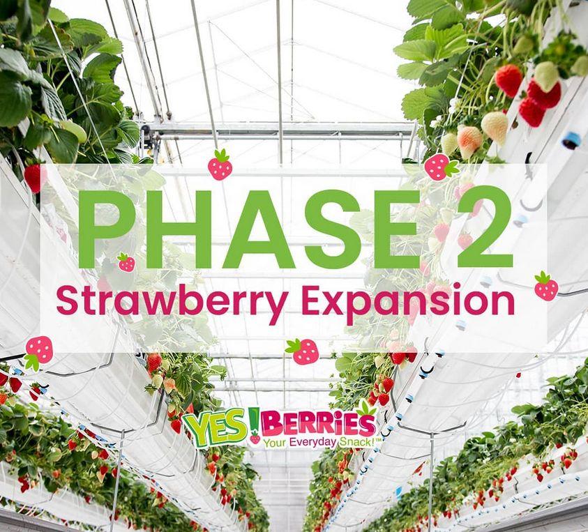 カナダのデル・フレスコ社、拡大する国内需要のため、7haのイチゴ植物工場を稼働