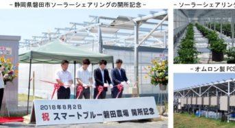 MOVIMAS、ICT農業・植物工場タイプの営農型ソーラーシェアリングを提供開始